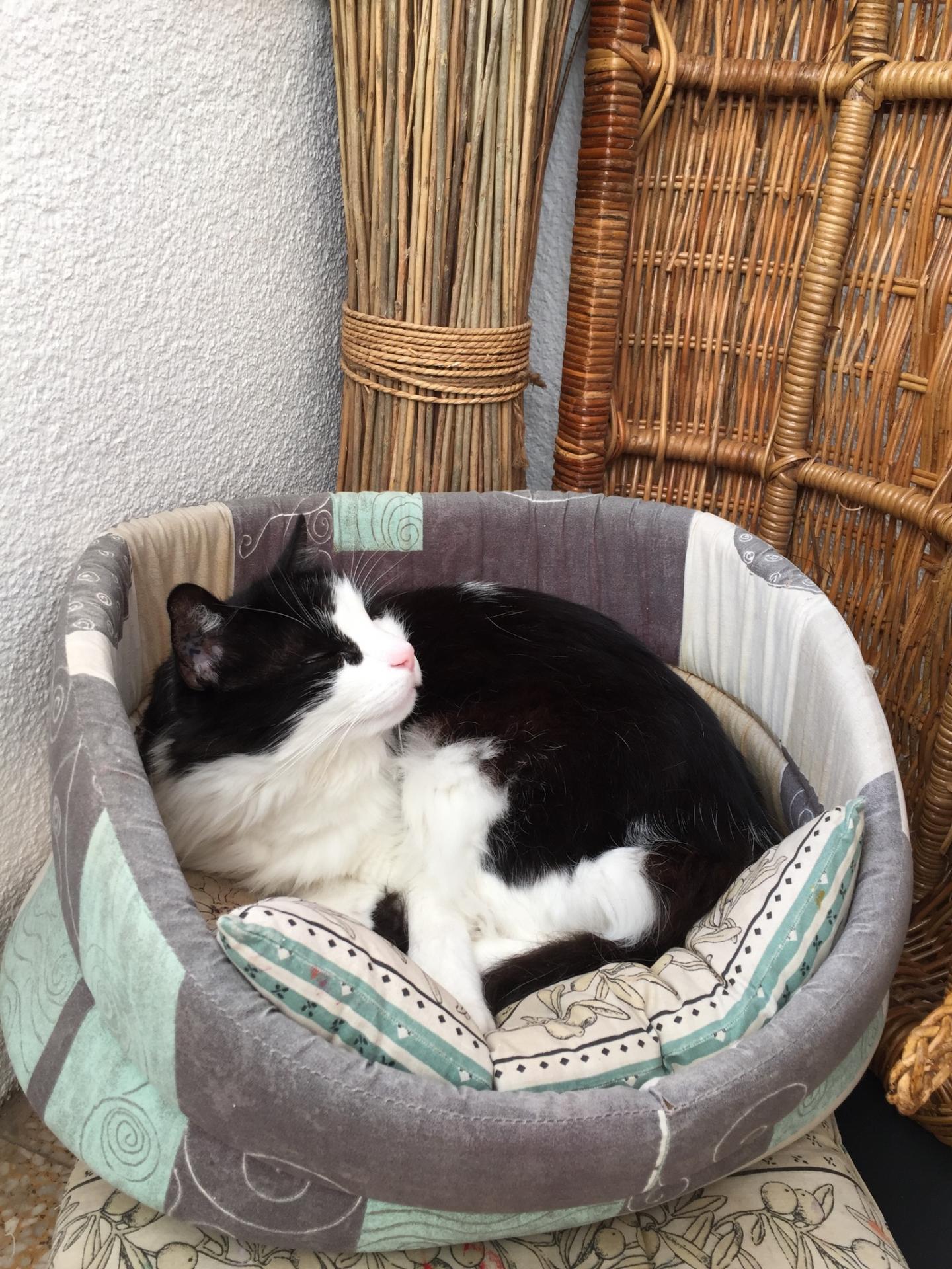 Le chat Jaurès